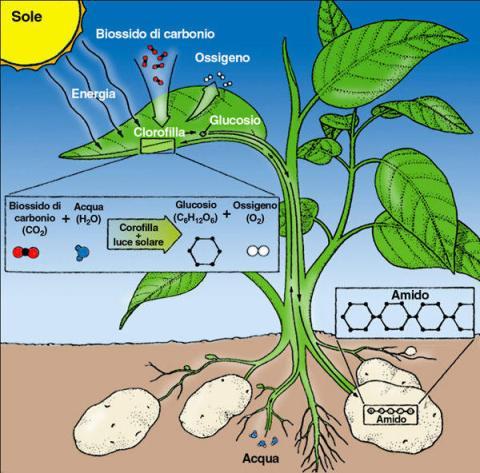 fotosintesig (1)